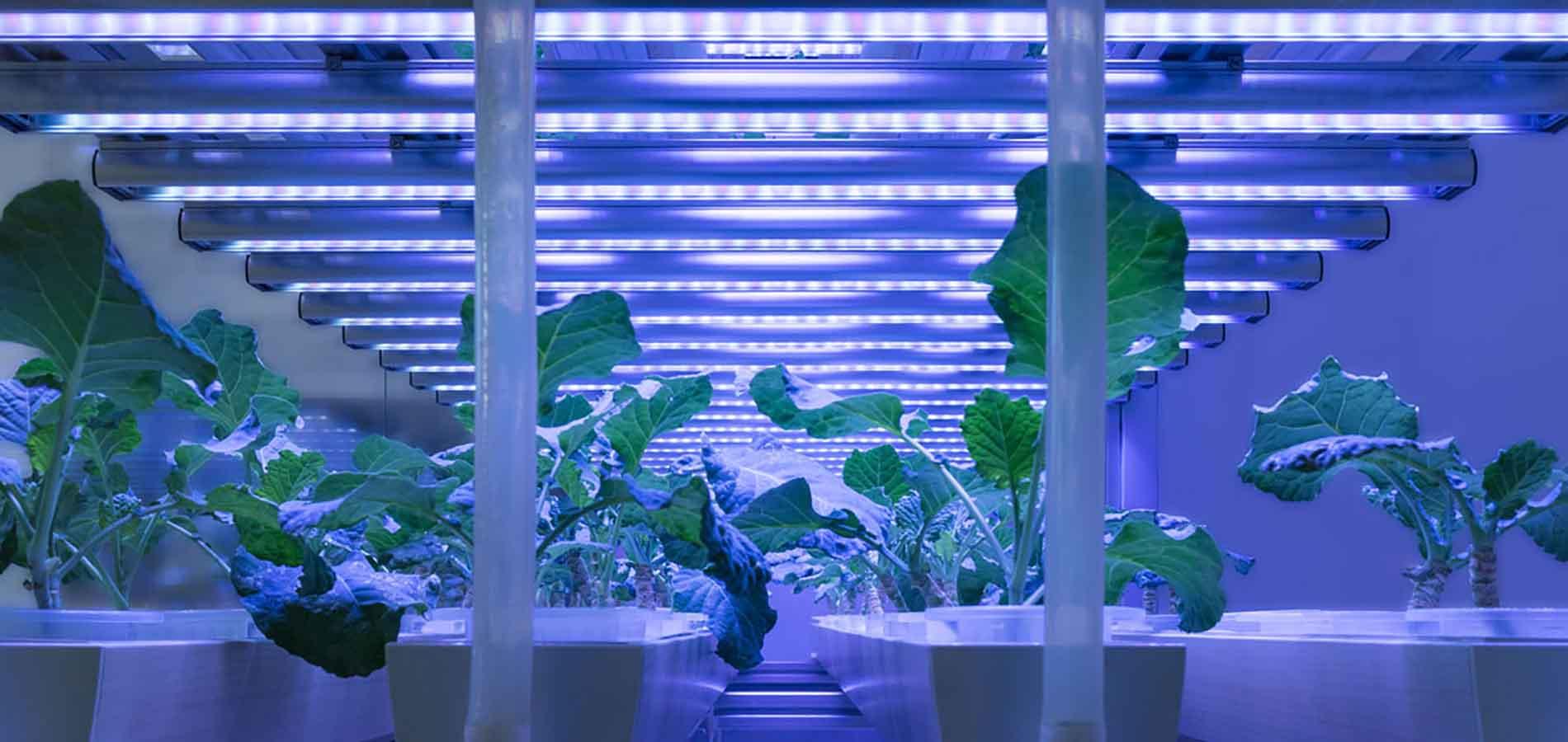 Métricas de iluminación de horticultura
